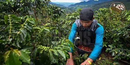 قهوهی کلمبیا ؛ تولیدکننده قهوههای اسپشیالیتی