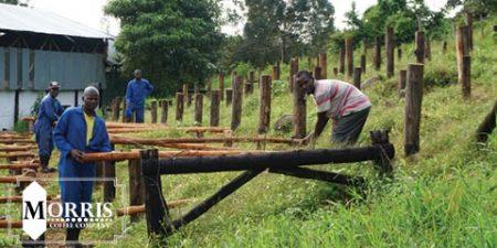تجدید علاقه نسل جوان به تولید قهوه کنیا – قسمت نخست