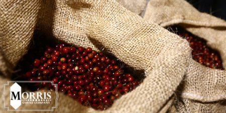 جوانسازی تولید قهوه در کنیا – قسمت دوم