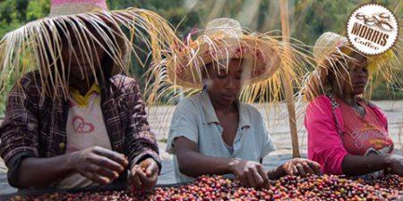 دلایل شهرت و محبوبیت قهوه سیداما اتیوپی