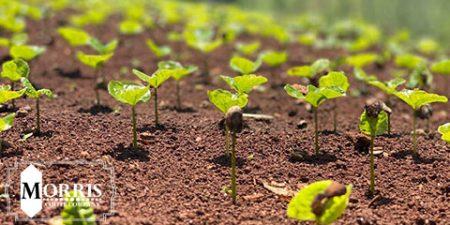 کاوش در انواع قهوه هیرلووم اتیوپی
