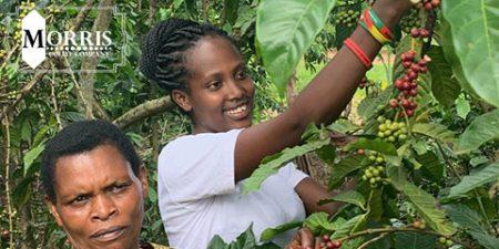 بررسی میزان مصرف قهوه در اوگاندا – قسمت نخست