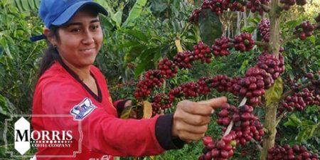 قهوه ووش ووش اتیوپی چیست؟ – قسمت دوم