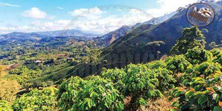 قهوه پرو یکی از پیشتازان قهوه ارگانیک