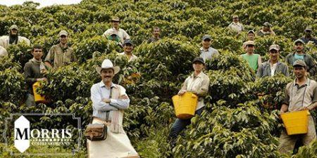 راهنمای قهوهی کلمبیایی – قسمت دوم