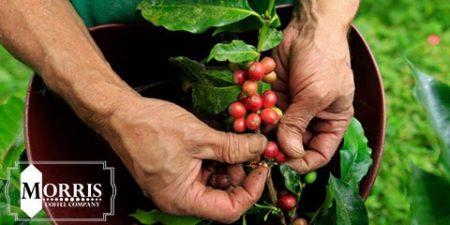 راهنمای قهوهی کلمبیایی – قسمت نخست