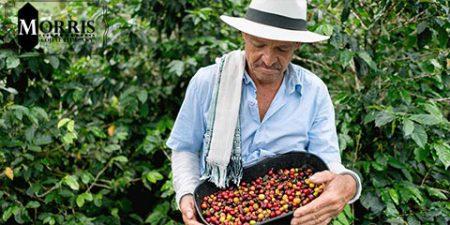 قهوه کلمبیایی و ویژگیهای آن
