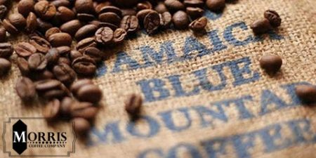 واژگان قهوه: بلومانتین جامائیکا