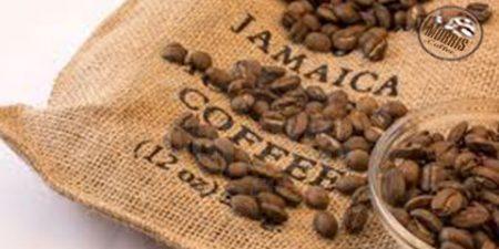 قهوه ی جامائیکا گرانترین قهوه در دنیا