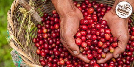 آغاز به کار جشنواره جهانی قهوه آنلاین از 30 اکتبر