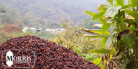 انتشار کتاب جدید «پیروزی: برزیلیهای سیاه قهوه»