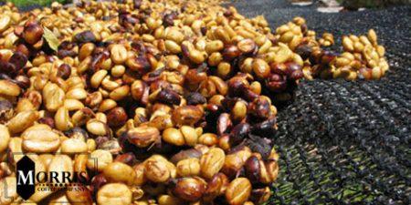 واژگان قهوه: اندونزی Indonesia