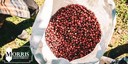قهوه در پاناما