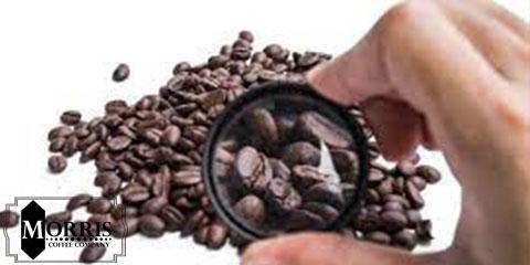 ژنتیک قهوه