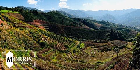 قهوه یوننان چین