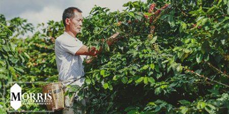 مشارکت برای برابری جنسیتی در صنعت قهوه