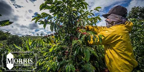 قیمت قهوه کلمبیا